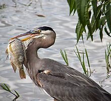 Fish For DInner by Lynne Morris