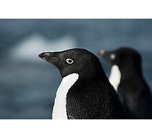 Adelie Penguin Side View Photographic Print