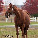 Nelson - NNEP Ottawa ON by Tracey  Dryka