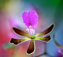 Orchids by Renee Hubbard Fine Art Photography