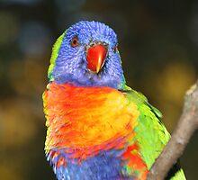 Rainbow Lorikeet Portrait by Carole-Anne