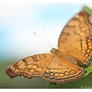 Brown and orange butterfly by bluetaipan