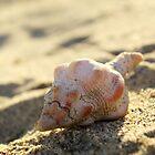 Shell by JasJustHuman