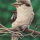 kookaburra by Mitchell O'Mahoney