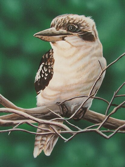 kookaburra by Mitchell O'Mahoney