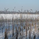 The frozen pond by Photos - Pauline Wherrell
