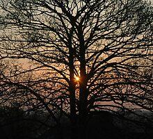 Tree at Sunrise by Crispel