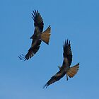 Two Red Kites in a Blue Sky by Crispel