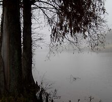 Fog and Cypress by WildestArt