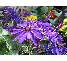 Echo of Spring - Glorious Senettti Planter Photographic Print