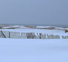 Snow Fence Art by BarbL