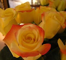 A love affair with roses by MarianBendeth