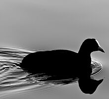 On the Water... by GerryMac