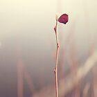 Alone by Elda