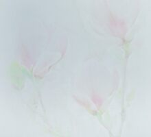 Magnolia's in Pastel by Catherine Hamilton-Veal  ©