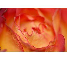 Sweet & Gentle Photographic Print