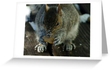 Squirrel with Peanut, Part 2 by Barry Doherty