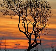 Pamlico Sunset by Robin Lee