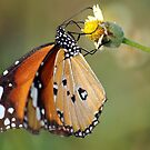 Butterfly with a Flower. by asharamu