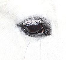 Wise Eye by KansasA