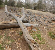 Natures' Sling Shot; Beaver Creek, AZ USA  by leih2008