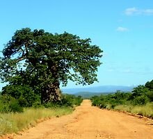 Take the gravel road past the old Baobab..... by Antionette