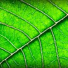 Leaf 2 by Judi Mowlem