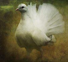 Peace by Carol Bleasdale