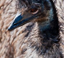 Emu at Chateau de Sauvage France by Michael Brewer