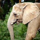 Elephant Smile by Rich Soublet
