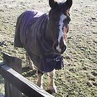 kingswood/surrey/horse in field (2) -(010212)- digital photo by paulramnora