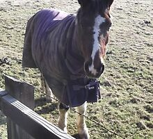 kingswood/surrey/horse in field (2) -(010212)- digital photo by paulramnora