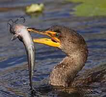 Double-crested Cormorant Fishing by naturalnomad