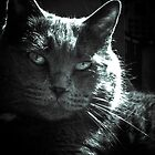 Gray Cat by Laura Godden