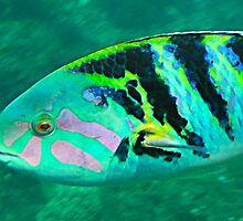 rainbow fish extreme by Michael Brewer