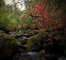 Out Of The Dark There Is Light by Charles & Patricia   Harkins ~ Picture Oregon