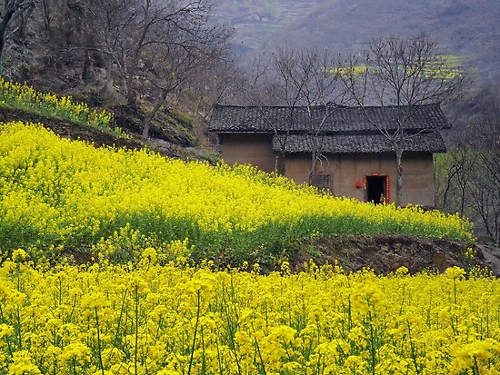 Yellow Flowers and Farmhouse, China by EricKuns