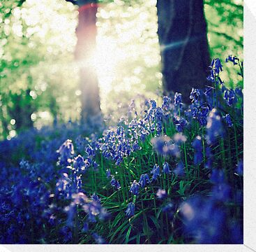 Bluebells by garethrhys