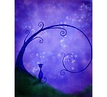 Under the Stary Sky Photographic Print