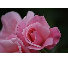 Rose purity Photographic Print