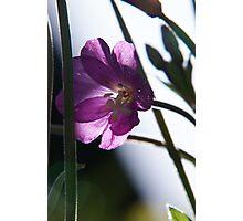 Criss-cross with sunbeams Photographic Print