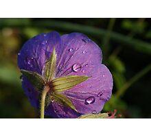 Serene dewdrops Photographic Print
