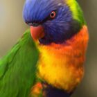Parrot by Shannon Posedenti
