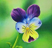 Wild Viola by lanadi