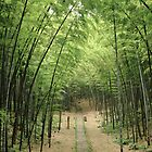 Quiet bamboo forest by SHOT