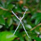 Cross Spider by peasticks