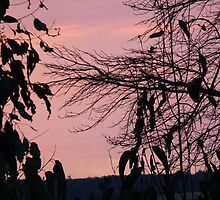Pink Sky at Night by JudyDarcy