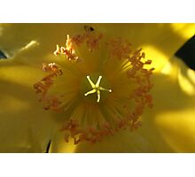 Crown of yellow Photographic Print