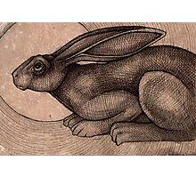 Crouching Hare Photographic Print