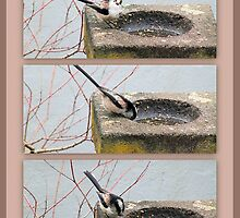 Long Tailed Tit Foraging by missmoneypenny